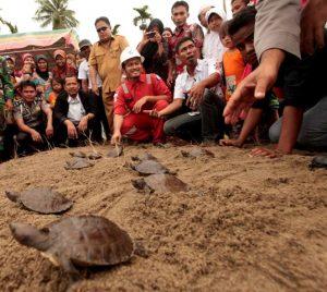 Pelepasan 77 tukik kura-kura tuntung ke habitatnya oleh Manajemen PT Pertamina EP Field Rantau dan para aktivis lingkungan di Aceh Tamiang.