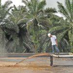 PLN Ubah Limbah Kelapa Sawit Jadi Listrik di Sampit