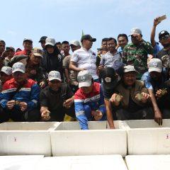 Pertamina EP Rantau Melepasliarkan 433 Tukik Tuntong Laut