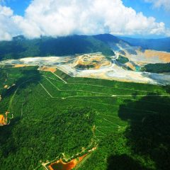 Amman Mineral Target Tingkatkan Areal Reklamasi Tambang Batu Hijau