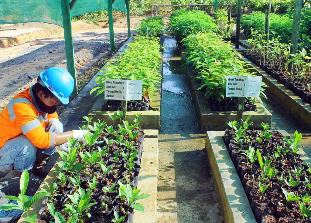 ABM Reklamasi 68,4% Lahan Tambang Tunas Inti