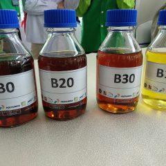 Ekspor Diproyeksi Turun Drastis, Produksi Biodiesel Diprioritaskan untuk Kebutuhan Dalam Negeri