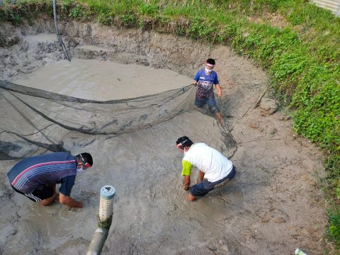 Kelompok Binaan Pertagas Prabumulih Panen Budidaya Ikan Patin