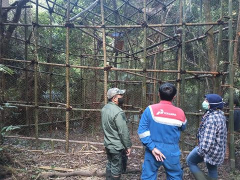 Keren! Produksi Minyak Naik, Pertamina EP Subang Komitmen Lestarikan Satwa Langka