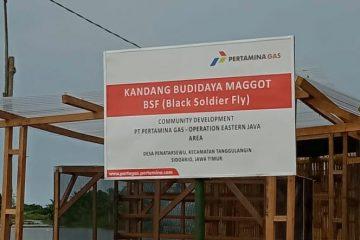 Kampung Ikan Asap Penatarsewu Binaan Pertagas Budidayakan Manggot